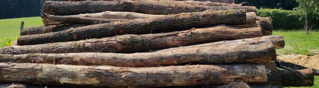 BaumfällungSlider